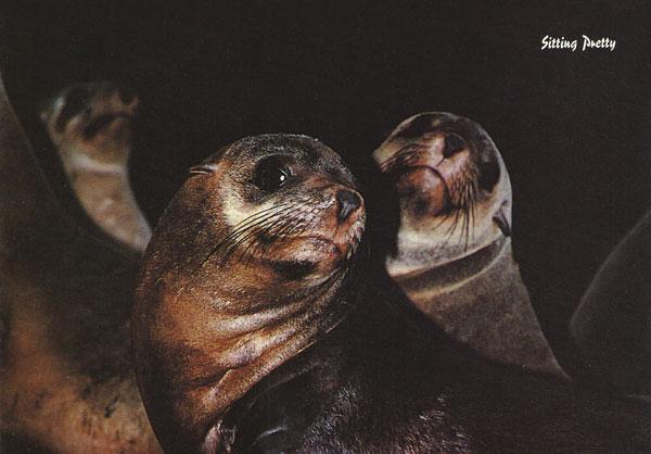 Seals Sitting Pretty
